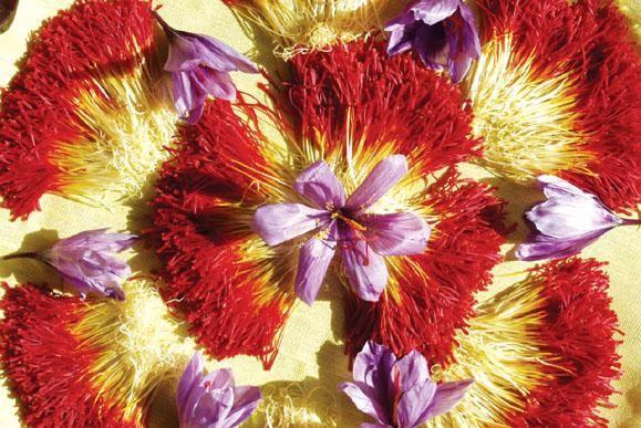 saffon ngan ngua soi than - Ngăn Ngừa Sỏi Thận Hiệu Quả Với Saffron