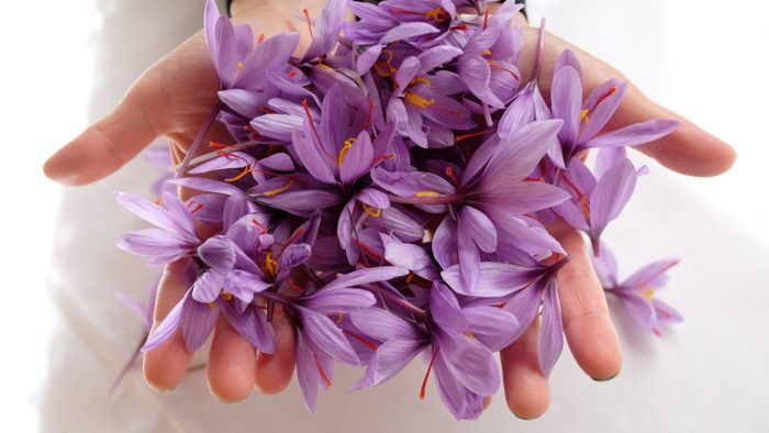 saffron tri da chay nang 700x394 - CỨU NGUY DA BỊ CHÁY NẮNG VỚI SAFFRON
